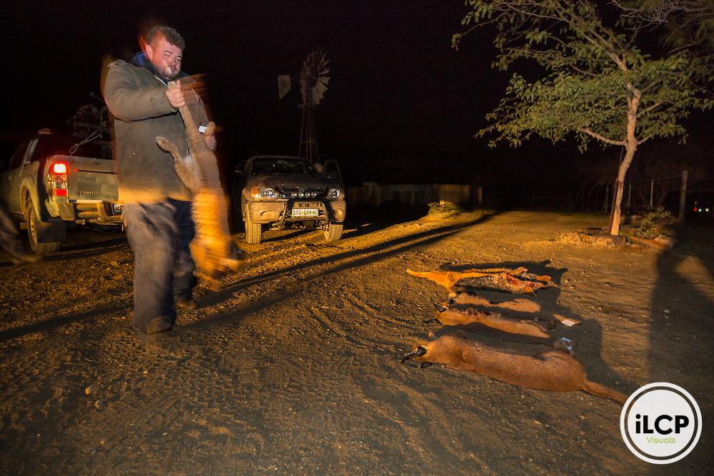 Back on night hunting. one of professional hunters has its hunting at night. A total of a dozen predators is reported every night for eight days.<br /> Rietbron, Eastern Cape, South Africa / Retour de la chasse nocturne. l'un des chasseurs professionnels dispose sa chasse de la nuit. Au total, une dizaine de pr&eacute;dateurs est rapport&eacute;e chaque nuit pendant 8 jours.<br /> Rietbron, Eastern Cape, Afrique du Sud