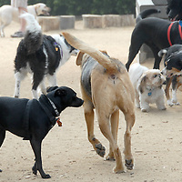 Dogs play during the during the Herb Katz Dog Park dedication ceremony at Joslyn Park  on Thursday, May 5, 2011.