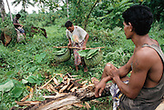 Alatupe collects firewood, coconuts, and leaves for cooking from the nearby forest close to his home in Poutasi Village, Western Somoa. Work, Food. The Lagavale family lives in a 720-square-foot tin-roofed open-air house with a detached cookhouse in Poutasi Village, Western Samoa. Material World Project.