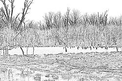 02Apr2010: A feeder creek is swollen with the spring run off creating a virtual marshland at Comlara Park, McLean County, Illinois<br />