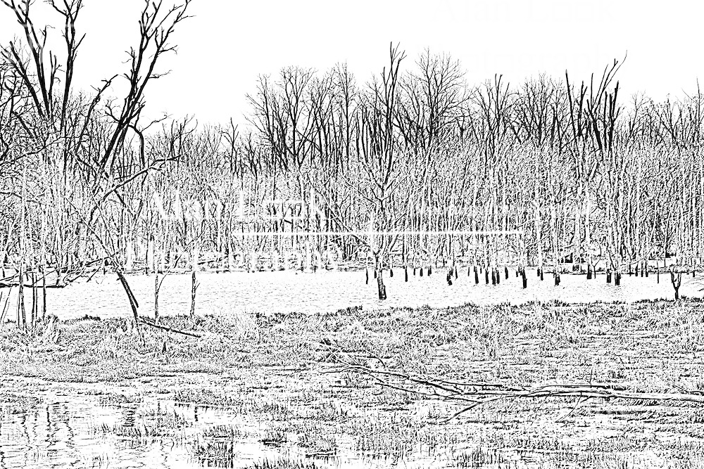 02Apr2010: A feeder creek is swollen with the spring run off creating a virtual marshland at Comlara Park, McLean County, Illinois<br /> <br /> This image was produced in part utilizing High Dynamic Range (HDR) or panoramic stitching or other computer software manipulation processes. It should not be used editorially without being listed as an illustration or with a disclaimer. It may or may not be an accurate representation of the scene as originally photographed and the finished image is the creation of the photographer.