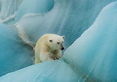 Svalbard #9 2010