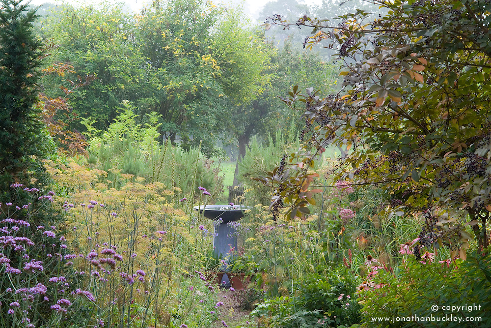 Looking along central path towards water feature. Verbena bonariensis and Sambucus nigra in the foreground