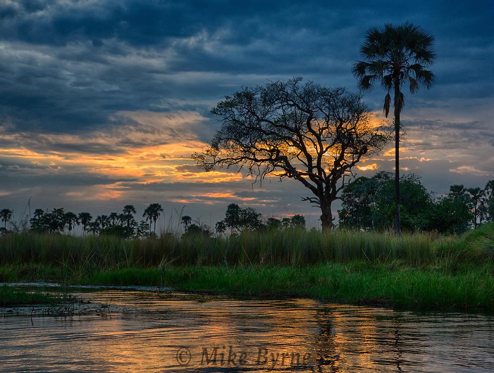 Sacred ibis at Moremi Crossing, Botswana