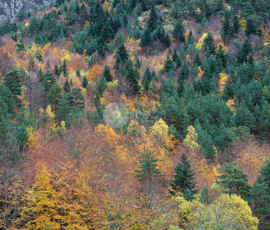 Selva de oza.  Valle de Hecho. Parque Natural de los Valles Occidentales. Pirineos. Huesca ©AntonioReal Hurtado / PILAR REVILLA
