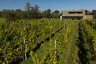 De Frysling is de meest noordelijke wijngaard van Nederland, gelegen net buiten het dorp Twijzel, in de Friese gemeente Achtkarspelen. Hier, op de 53ste breedtegraad, in de buurt van de Waddenzee en in de beschutting van het prachtige Friese woudengebied, is er sinds 2009 een weelderige wijngaard ontstaan. Wat ooit een droom was voor Douwe en Jantiene Broersma, is op deze bijzondere plek met veel passie en re&euml;le ondernemerszin, gestalte gegeven.<br /> <br /> The Frysling is the most northern vineyard in the Netherlands, located just outside the village Twijzel in the Frisian municipality Achtkarspelen. Here, on the 53rd latitude, near the Wadden Sea and in the shelter of the beautiful Frisian forest area, there is a lush vineyard emerged since 2009. What was once a dream for Douwe and Jantiene Broersma, is shaped in this special place with a lot of passion and real entrepreneurship.