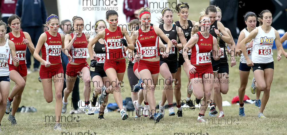 (Kingston, Ontario -- 14 Nov 2009)  The Guelph University women's team starts the 2009 Canadian Interuniversity Sport CIS Cross Country Championships at Forth Henry Hill in Kingston Ontario. Photograph copyright Sean Burges / Mundo Sport Images, 2009.