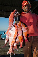 Small-scale line fisher with his catch of reef fish , Struisbaai, Western Cape, South Africa