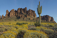 Superstition Mountains, Arizona, Saguaro (Carnegiea gigantea) and Brittlebush (Encelia farinosa) in the foreground