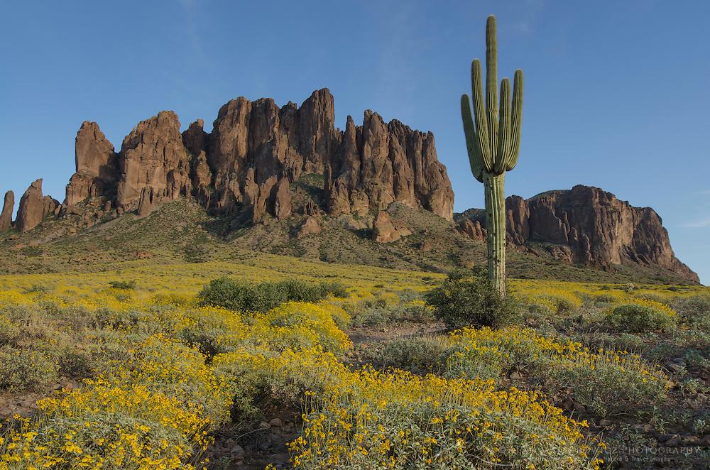 Superstition Mountains, Arizona, Saguaro (Carnegiea gigantea) and Brittlebush (Encelia farinosa) in the foreground