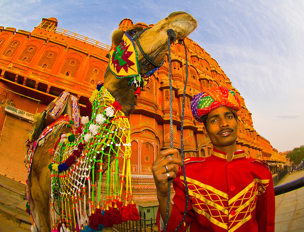 Camel in front of the Hawa Mahal (Palace of the Winds), Jaipur, Rajasthan, India