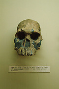Africa. Kenya.  Nairobi. National Museum..Humanoid skull fossil found in Koobi Bora East Turkana by Richard Leaky. This skull known as item no 1470 is of homo hablis who lived approximately 2 million years ago. .CD0012