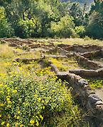 0202-1008D ~ Copyright:  George H. H. Huey ~ Ruins of Tyuonyi Pueblo w/sunflowers, Anasazi culture site, with 400 rooms, two or perhaps stories, constructed A.D. 1300's.  Frijoles Canyon.  Bandelier National Monument, New Mexico.