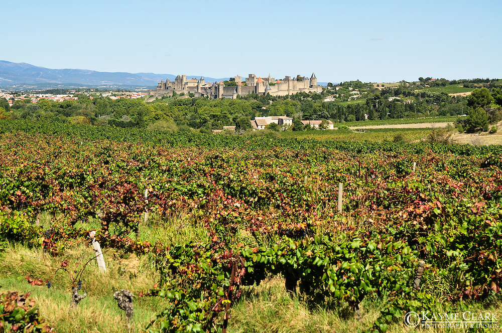 Vineyards in the scenic surrounding countryside near the city of Carcassonne in the Languedoc-Roussillon region of southern France.