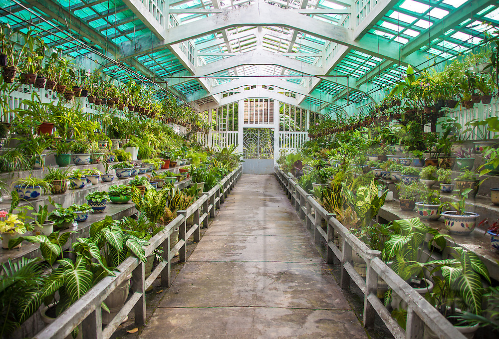 Luxuriant greenhouse in a botanical garden. Ho Chi Minh city ...
