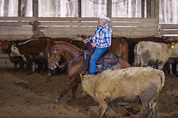 April 29 2017 - Minshall Farm Cutting 1, held at Minshall Farms, Hillsburgh Ontario. The event was put on by the Ontario Cutting Horse Association. Riding in the Ranch Class is Maurice Price on Smart Tari What owned by the rider.
