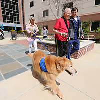 """Jack Balty, center, gets to walk with """"Charlie"""" as part of his rehab at North Mississippi Medical Center as part of a new pet therapy program with the local chapter of Comfort Creatures."""