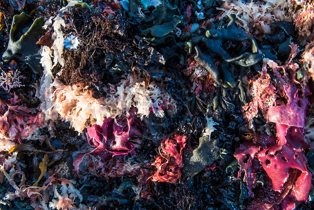 Beach detritus and seaweed, beach detritus, Agulhas National Park, Western Cape, South Africa