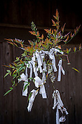 Pieces of paper with prayers in a tree by a temple at the Shikoku Pilgrimage, 88 temples associated with the Buddhist monk Kūkai (Kōbō Daishi) on the island of Shikoku, Japan.