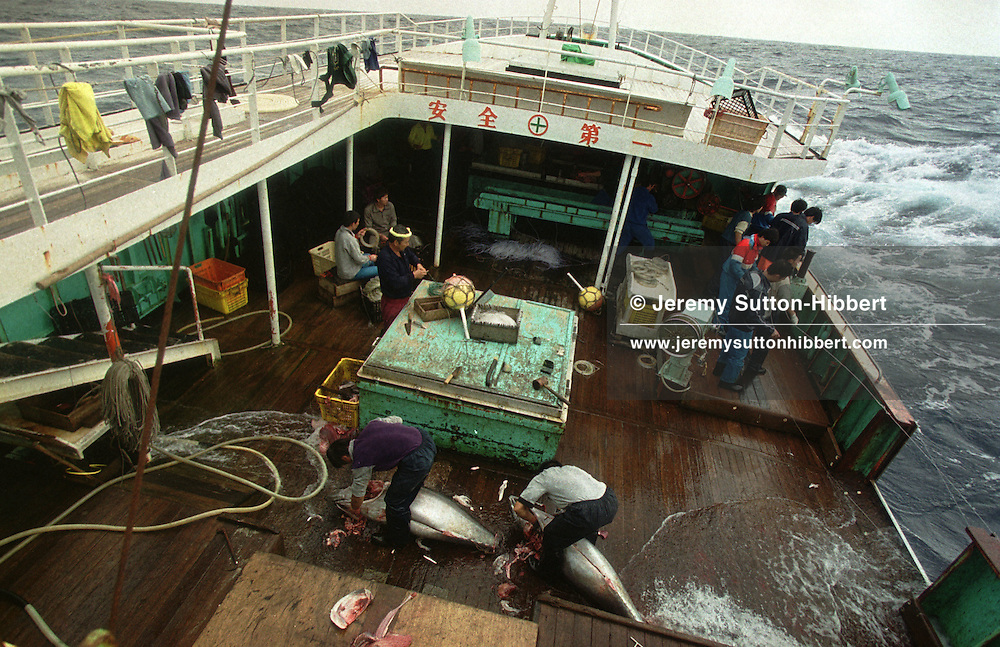 Aboard the Belize flagged 'Chien Chun No. 8' long liner fishing vessel, illegally fishing for tuna, but also catching by way of by-catch swordfish and marlin. The ship is operating out with any regulated quotas for catching of tuna. In the Southern Atlantic, 3rd May 2000.