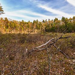 Spruce Hole Bog in Durham, New Hampshire. National Natural Landmark.