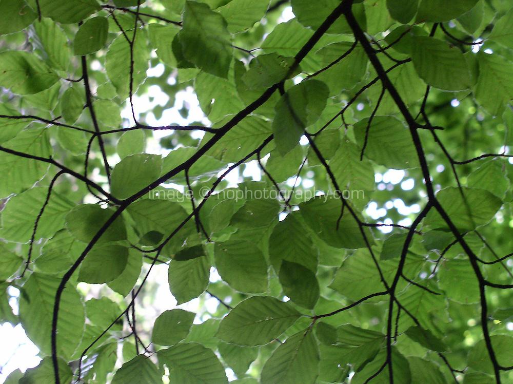 light through green leaves