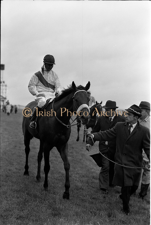 """29/06/1963<br /> 06/29/1963<br /> 29 June 1963<br /> Irish Sweeps Derby at the Curragh Racecourse, Co. Kildare. Pictured is """"Ragusa"""" the winning entry in the 1963 Irish sweeps Derby with jockey Garnie Bougoure after winning the race. Meg Mullion of Ardenode stud, owner of """"Ragusa"""", trained by Paddy Prendergast."""