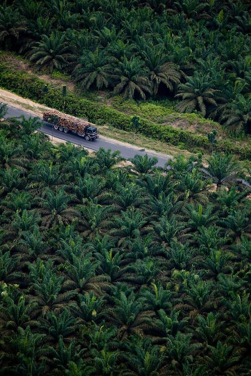 A log truck drives through palm oil plantations, near Perawang, Indonesia,  Aug. 28, 2008..Daniel Beltra/Greenpeace