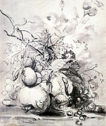 Still Life with Fruits.   Charlocal and grey wash. Jan van Huysum (1682-1749) Dutch painter and draughtsman.
