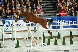 367 - Anmarsch<br /> KWPN Hengstenkeuring - 's Hertogenbosch 2008<br /> Photo © Hippo Foto
