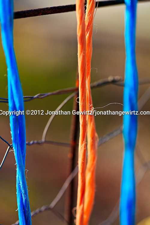 Colorful strands of orange and blue twine hang from the side of a chickenwire garden fence. WATERMARKS WILL NOT APPEAR ON PRINTS OR LICENSED IMAGES.