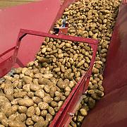 Idaho, Canyon County, Wilder, Simplot, World Potato Congress, Potato Farm Show, harvest, Shepody, variety, primarily used for the frozen french fry market