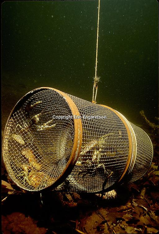Crayfish Trap<br /> <br /> ENGBRETSON UNDERWATER PHOTO