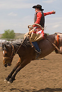 Saddle bronc rider makes successful ride at Miles City Bucking Horse Sale. Miles City Montana