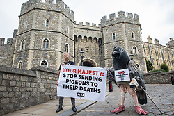 A bandaged giant pigeon on crutches is used by PETA activists to protest against pigeon racing outside Windsor Castle on 1 July 2020 in Windsor, United Kingdom. Animal rights charity PETA UK is calling on the Queen, who is currently isolating at Windsor Castle, to cut ties with pigeon racing following a PETA US investigation which revealed that all eight birds sent by the Queen to participate in the 2020 South African Million Dollar Pigeon Race (SAMDPR) died in quarantine and that fewer than a quarter of the birds entered for the race subsequently complete it.
