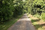 Quiet narrow treelined country lane Sutton, Suffolk, England, UK