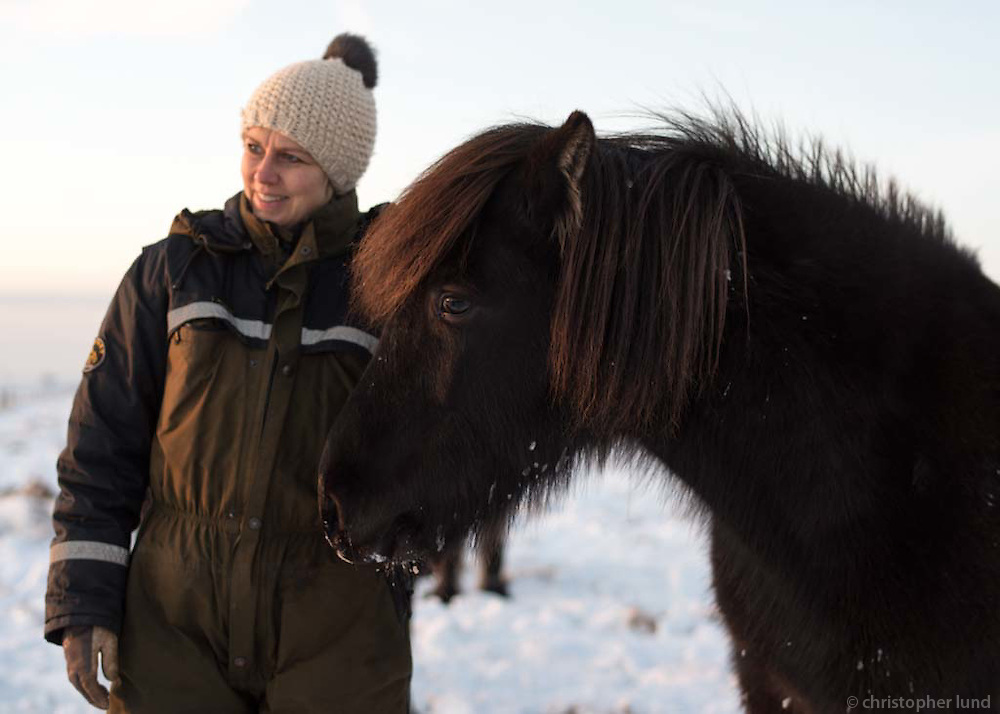 Hestarnir heimsóttir ´i hagann í des 2015.
