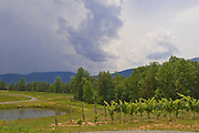 A storm approaches Mountfair Vineyards.