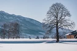 THEMENBILD - großer Baum in unberührter Winterlandschaft, aufgenommen am 06. Februar 2020 in Kaprun, Oesterreich // large tree in untouched winter landscape in Kaprun, Austria on 2020/02/06. EXPA Pictures © 2020, PhotoCredit: EXPA/Stefanie Oberhauser
