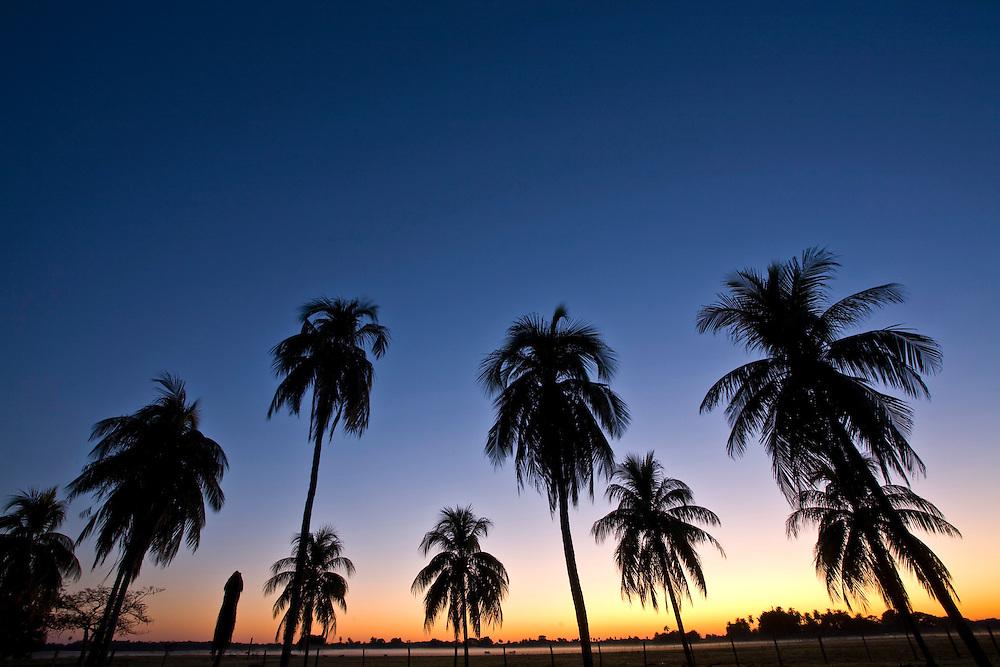 Aquidauana_MS, Brasil...Silhueta de coqueiros em uma paisagem na fazenda Rio Negro no Pantanal...The coconuts silhouette in landscape in Rio Negro farm in Pantanal...Foto: JOAO MARCOS ROSA / NITRO