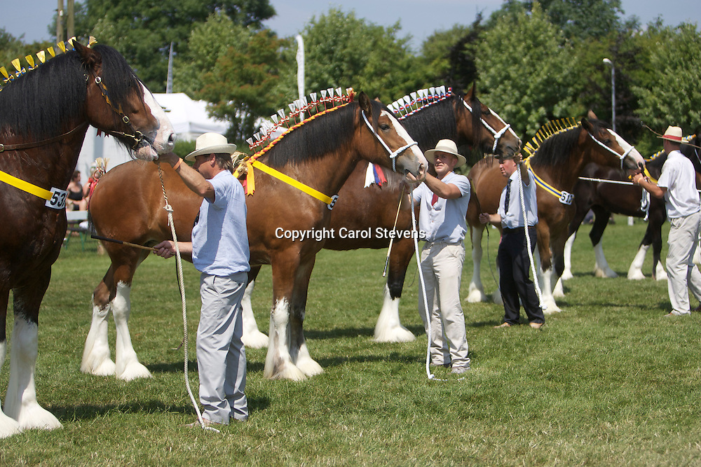 2nd left - Richard Bedford's 2 year old Hartcliff Rihanna shown by son Robert<br />