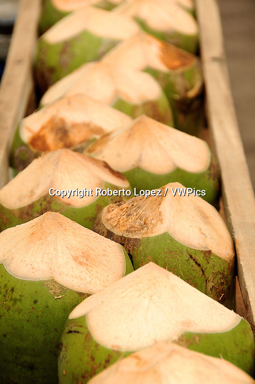 Coconut (Cocos Nucifera, Kingdom plante, class; monocots, order; Arecales, tribe; Cocoeae) stacked up in a wood canoe at the Tortuguero River side, Limon, Costa Rica.