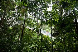 La Fortuna, Alajuela: People crossing a hanging bridge in the Arenal rainforest, Costa Rica.  Rainforest exploration at the Hanging Bridges.