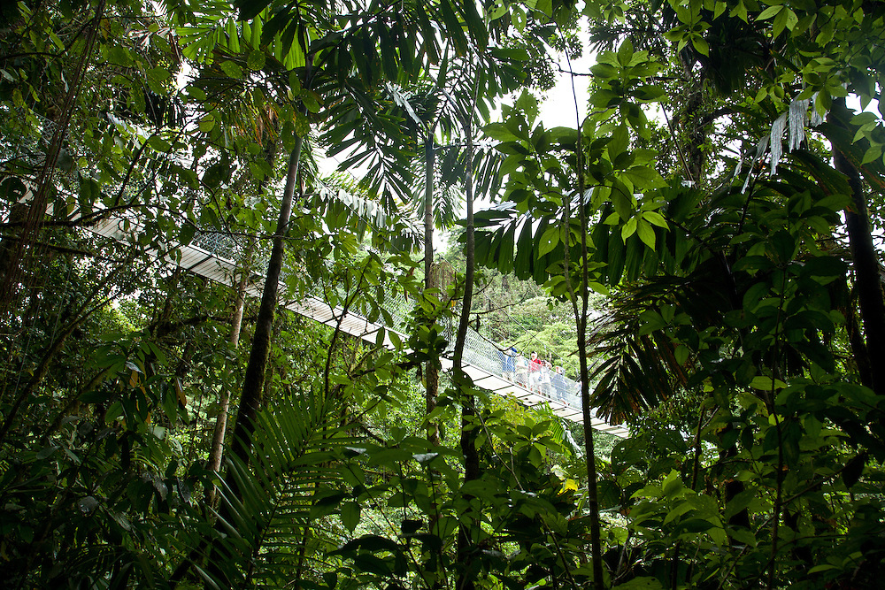 La Fortuna, Alajuela: People crossing a hanging bridge in the Arenal rainforest, Costa Rica.  Rainforest exploration at the Hanging Bridges.