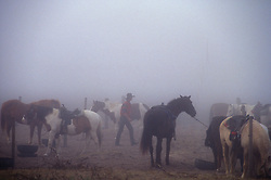 cowboy walking through a group of horses in the fog