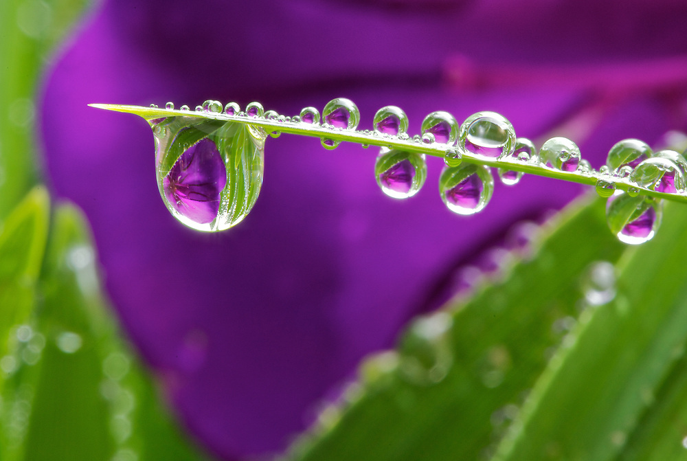 Image result for flower dew drops