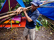 26 JANUARY 2018 - SANTO DOMINGO, ALBAY, PHILIPPINES: A man picks up saplings he cut to use as tent poles in an impromptu shelter for people evacuated from the slopes of the Mayon volcano. Many evacuees in Santo Domingo are putting up temporary shelters along the Legazpi - Tabaco Road, which runs through Santo Domingo. The volcano was relatively quiet Friday, but the number of evacuees swelled to nearly 80,000 as people left the side of  the volcano in search of safety. There are nearly 12,000 evacuees in Santo Domingo, one of the communities most impacted by the volcano. The number of evacuees is impacting the availability of shelter space. Many people in Santo Domingo, on the north side of the volcano, are sleeping in huts made from bamboo and plastic sheeting. The Philippines is now preparing to house the volcano evacuees for up to three months.       PHOTO BY JACK KURTZ