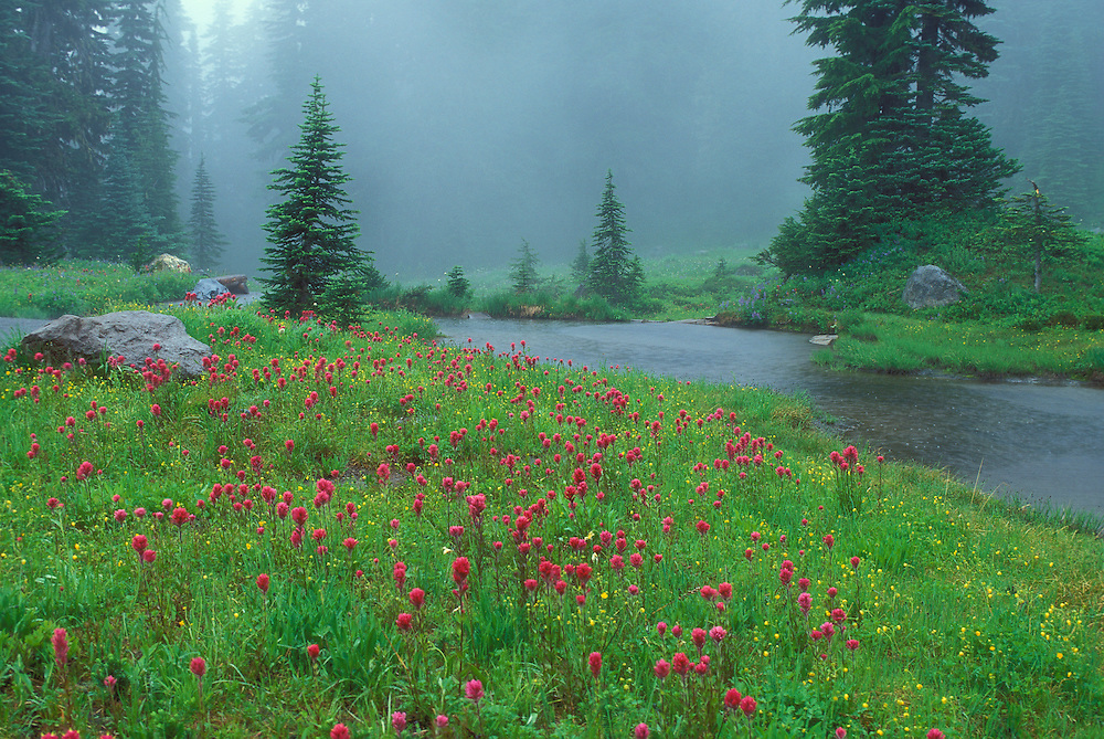 Wildflowers and pond in rain, along Nisqually Vista Trail; Mount Rainier National Park, Washington.