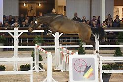 034 - Moulon vd Burkelslag<br /> Hengstenkeuring BWP - Azelhof - Koningshooikt 2015<br /> ©  Dirk Caremans