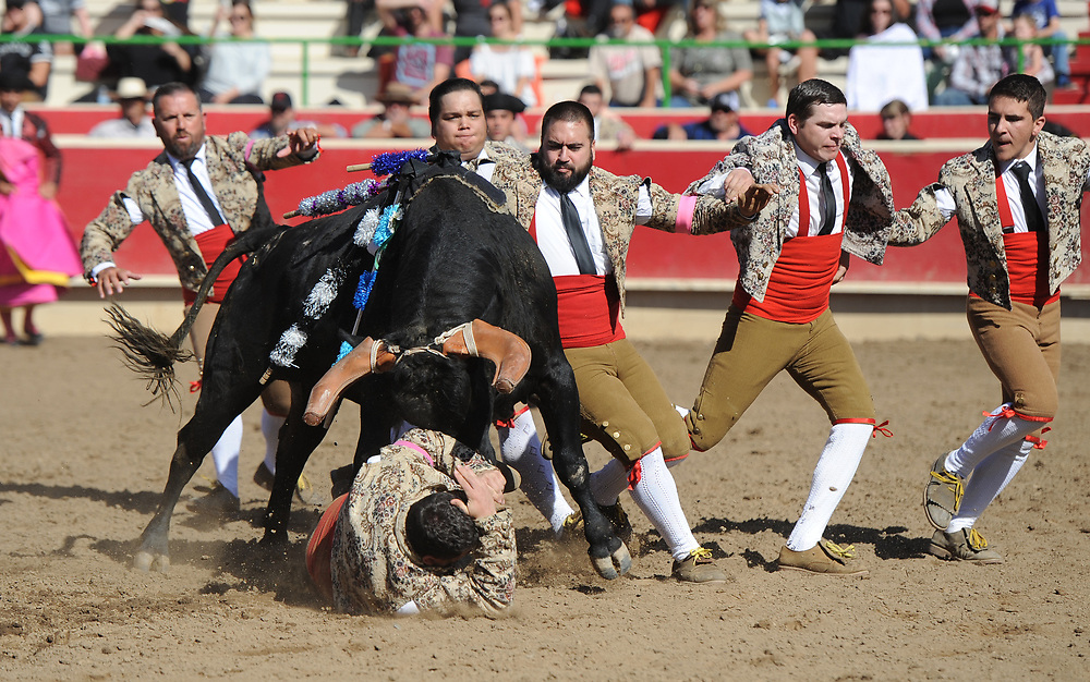 BEA AHBECK/NEWS-SENTINEL<br /> Aposento de Turlock during the first grab during the bloodless bullfight during the Our Lady of Fatima Portuguese Festival in Thornton Saturday, Oct. 14, 2017.